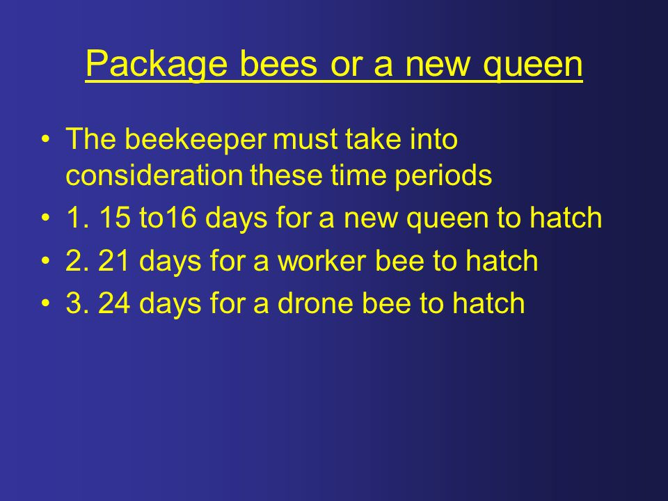 Package bees or a new queen