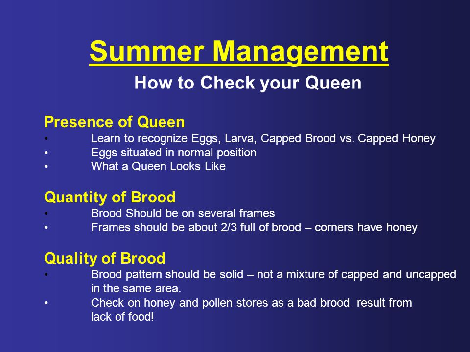Summer Management How to Check your Queen Presence of Queen