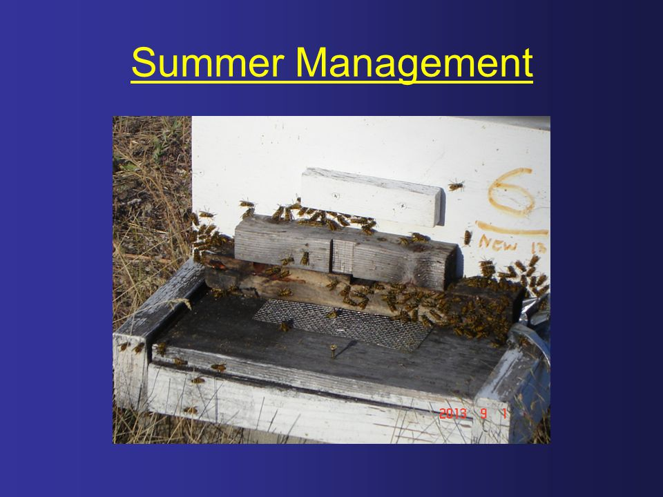 Summer Management