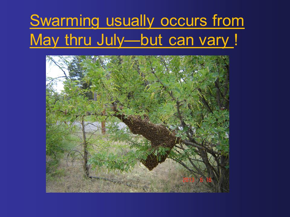 Swarming usually occurs from May thru July—but can vary !