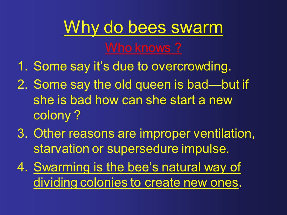 Why do bees swarm Who knows Some say it's due to overcrowding.