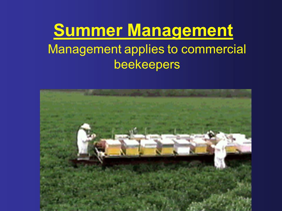 Management applies to commercial beekeepers