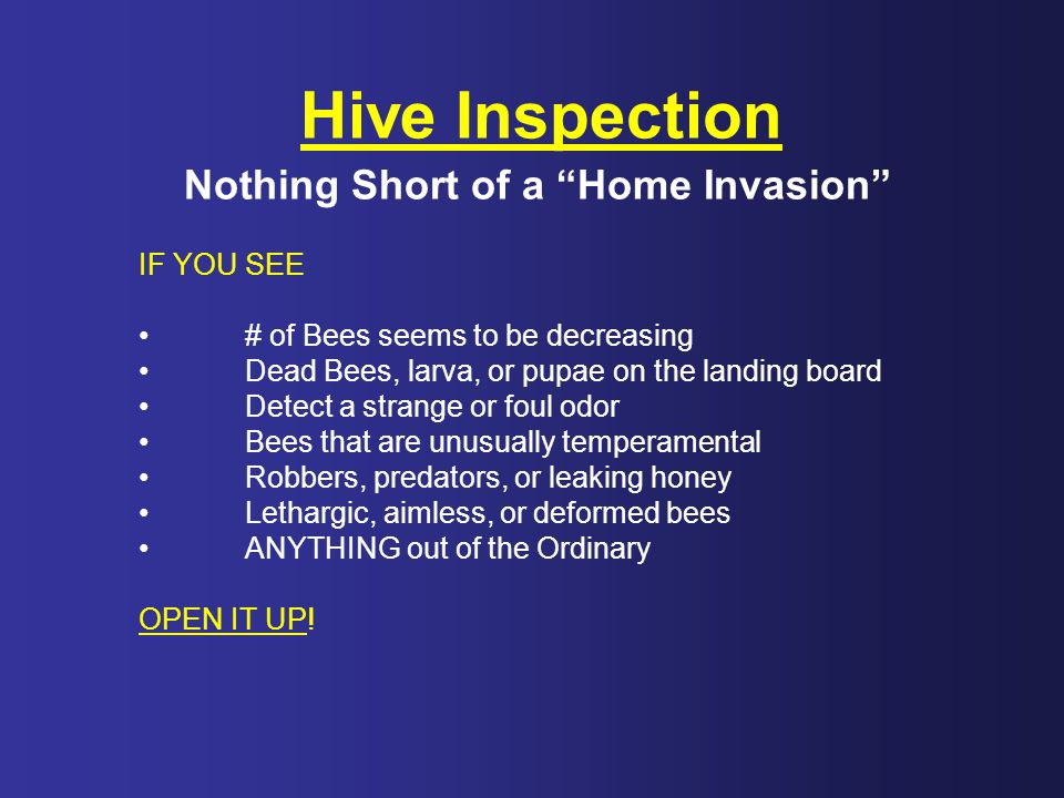 Hive Inspection Nothing Short of a Home Invasion IF YOU SEE