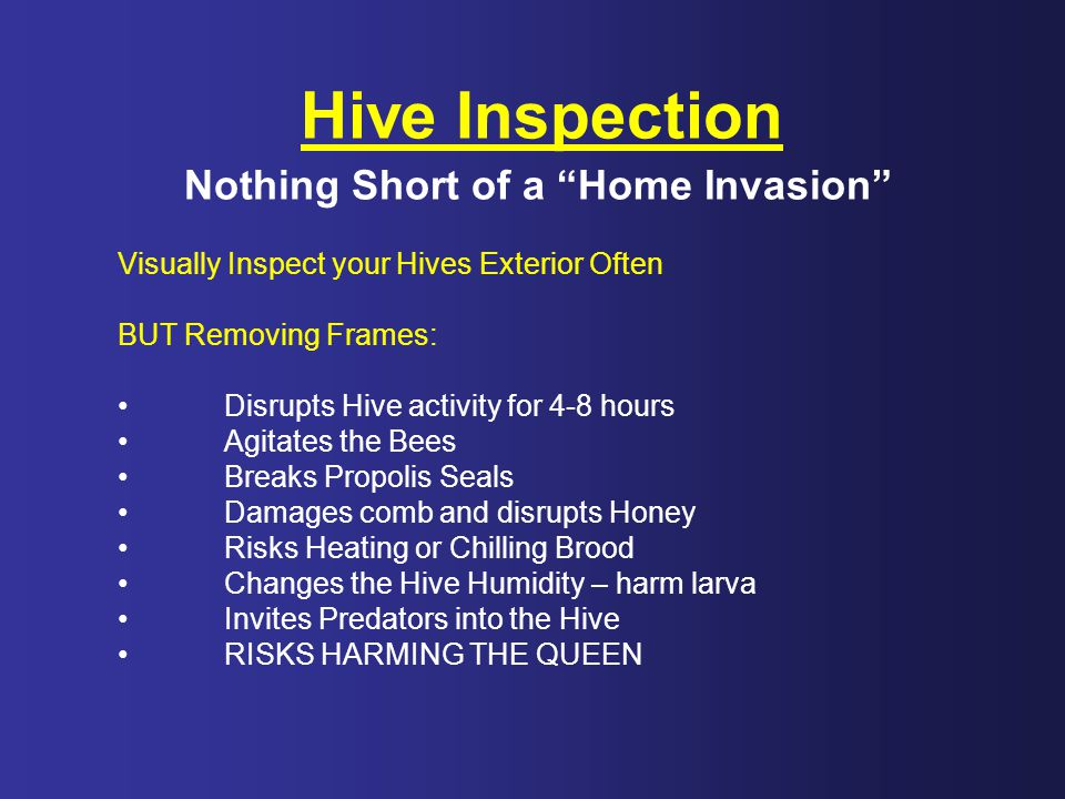 Hive Inspection Nothing Short of a Home Invasion