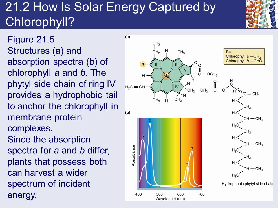 21.2 How Is Solar Energy Captured by Chlorophyll