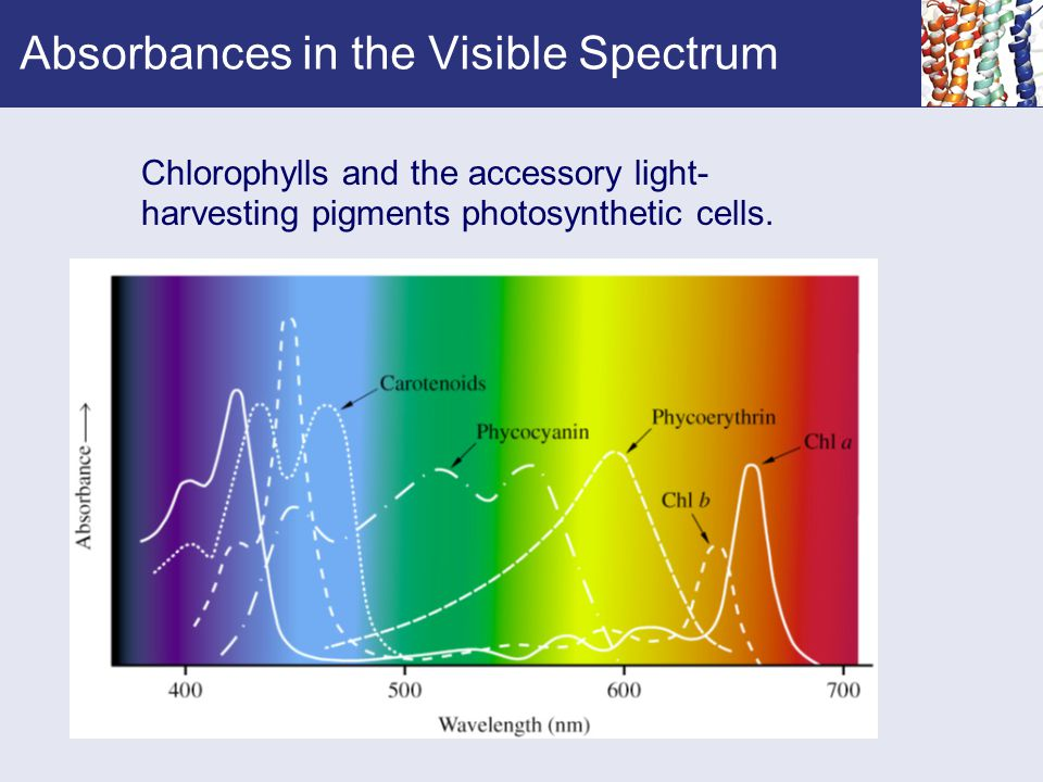 Absorbances in the Visible Spectrum