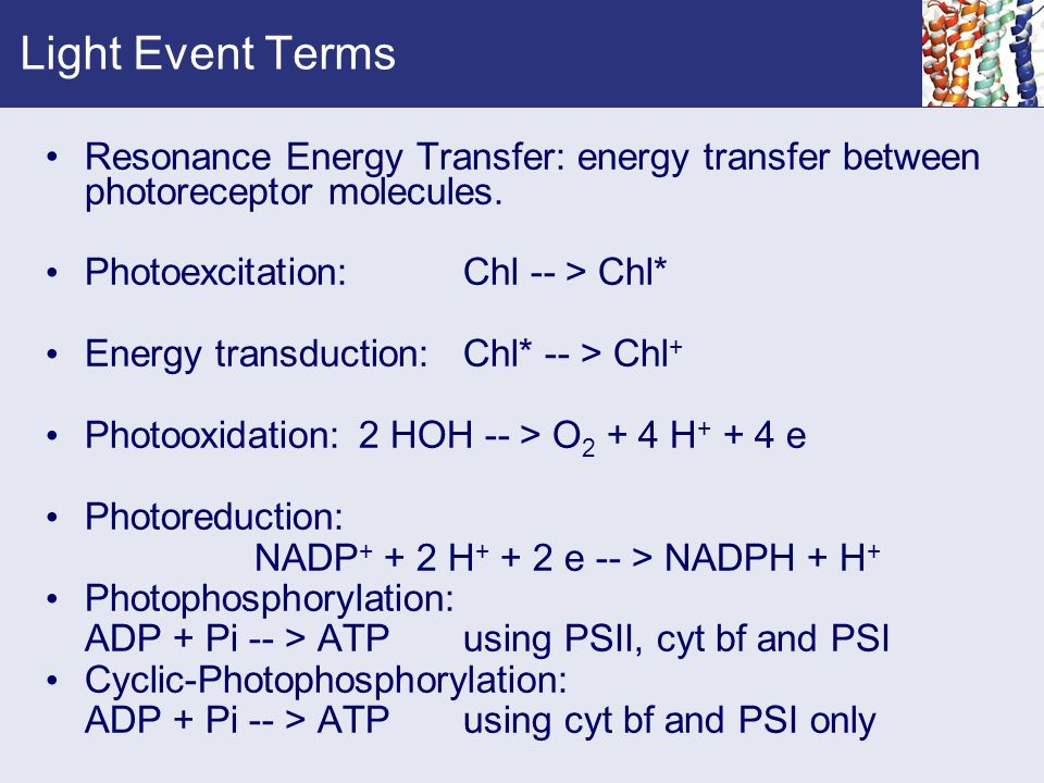 Light Event Terms Resonance Energy Transfer: energy transfer between photoreceptor molecules. Photoexcitation: Chl -- > Chl*