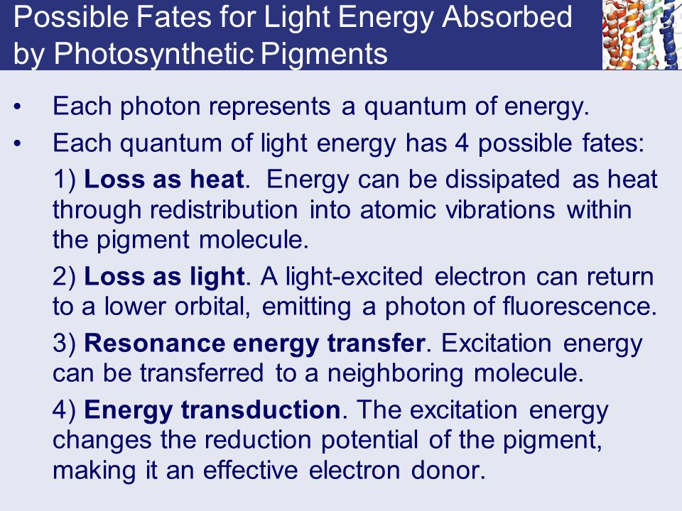 Possible Fates for Light Energy Absorbed by Photosynthetic Pigments