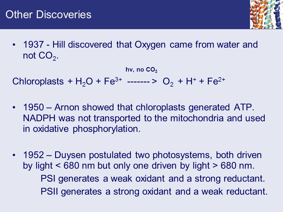 Other Discoveries 1937 - Hill discovered that Oxygen came from water and not CO2. hv, no CO2. Chloroplasts + H2O + Fe3+ ------- > O2 + H+ + Fe2+
