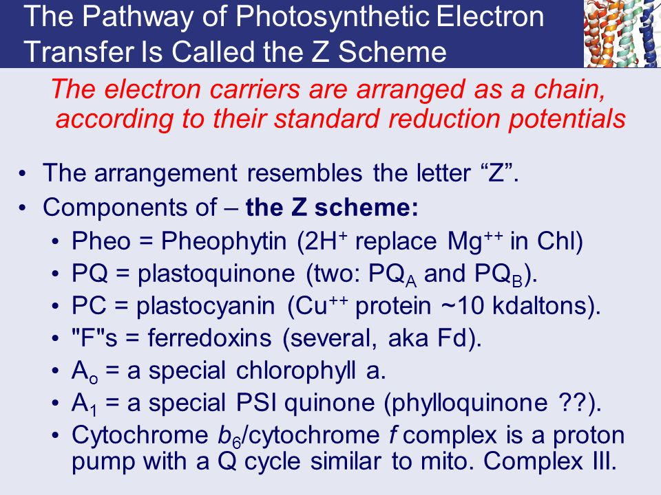 The Pathway of Photosynthetic Electron Transfer Is Called the Z Scheme