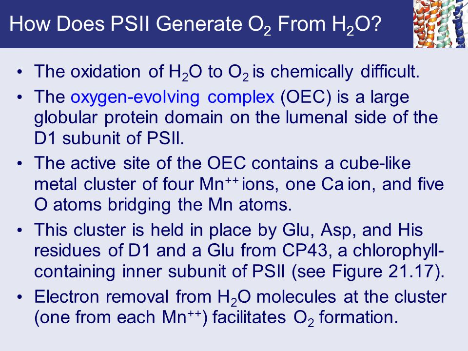 How Does PSII Generate O2 From H2O