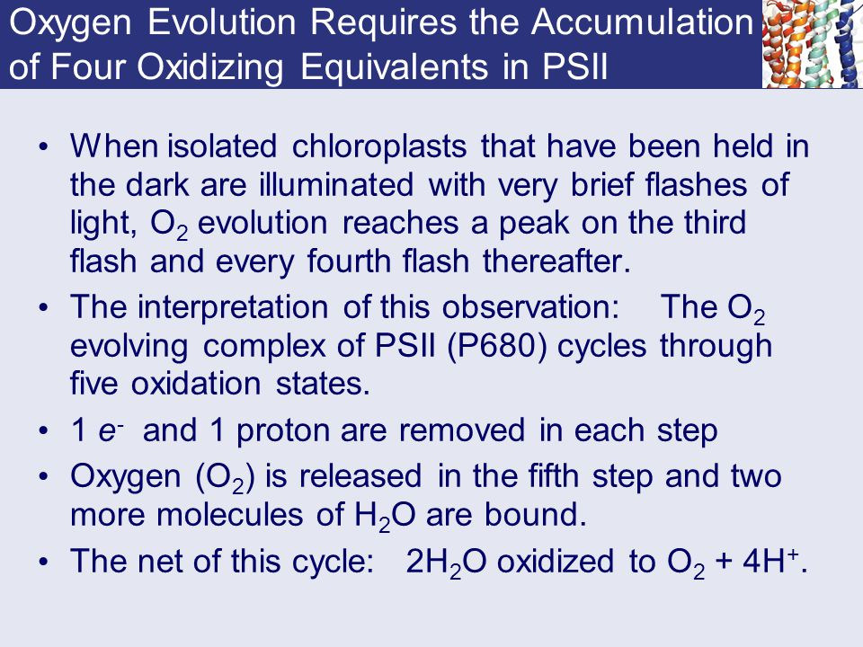 Oxygen Evolution Requires the Accumulation of Four Oxidizing Equivalents in PSII