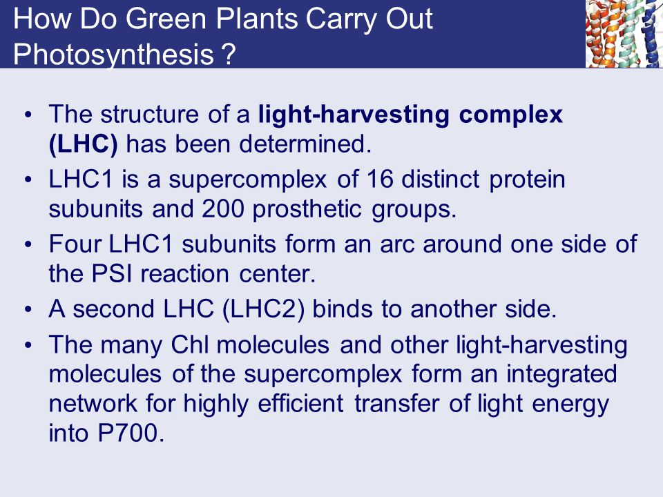 How Do Green Plants Carry Out Photosynthesis