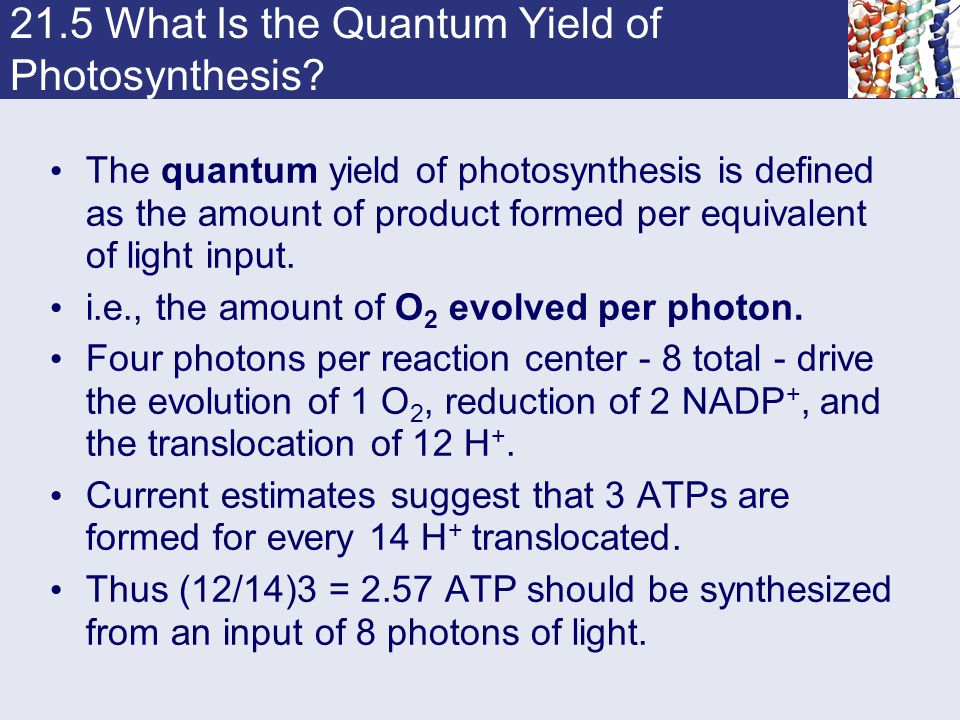 21.5 What Is the Quantum Yield of Photosynthesis