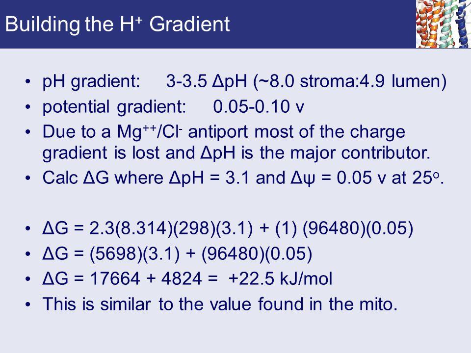 Building the H+ Gradient