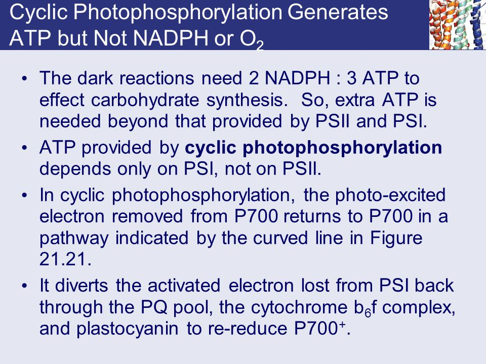 Cyclic Photophosphorylation Generates ATP but Not NADPH or O2