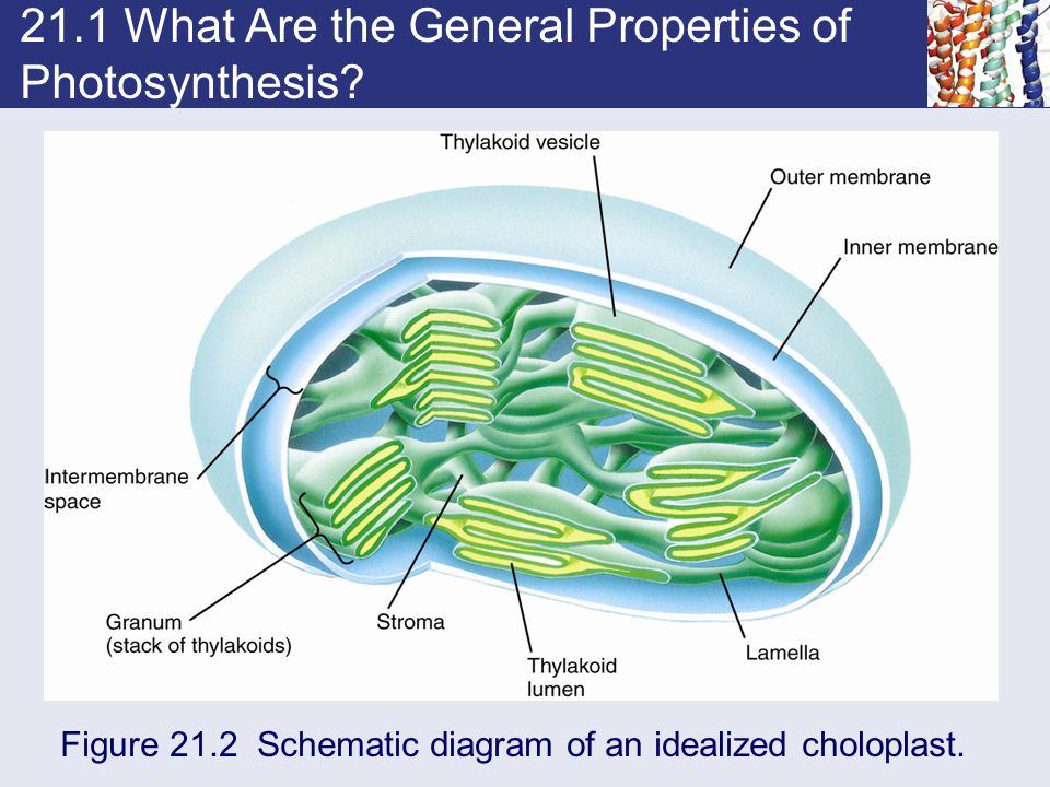 21.1 What Are the General Properties of Photosynthesis