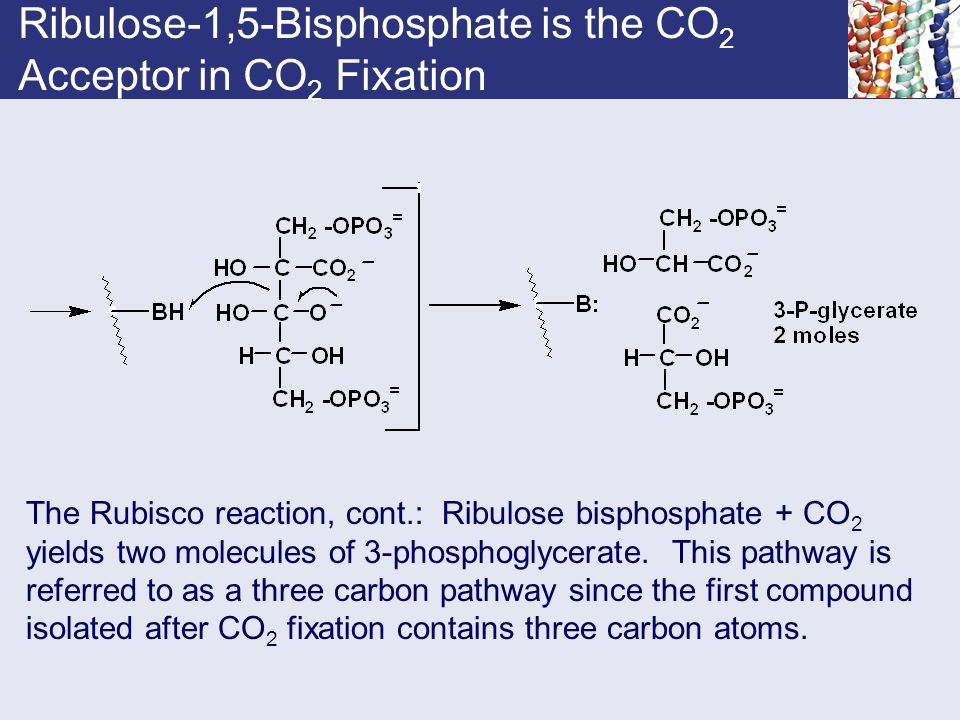 Ribulose-1,5-Bisphosphate is the CO2 Acceptor in CO2 Fixation