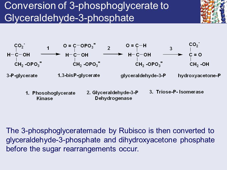 Conversion of 3-phosphoglycerate to Glyceraldehyde-3-phosphate
