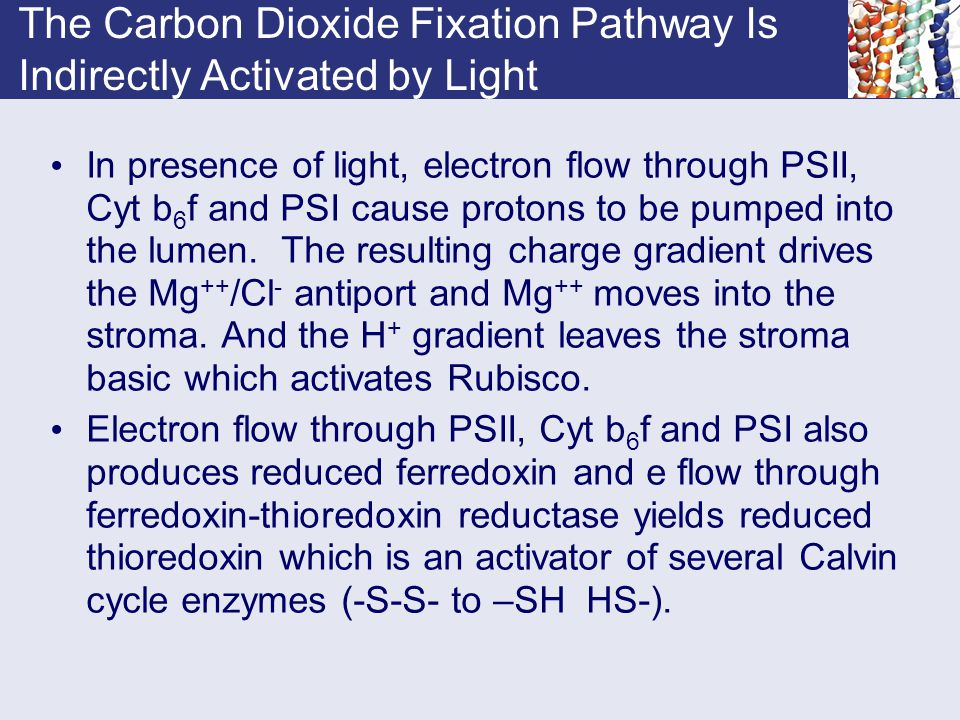 The Carbon Dioxide Fixation Pathway Is Indirectly Activated by Light
