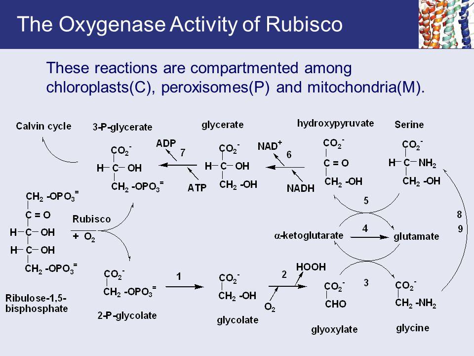 The Oxygenase Activity of Rubisco