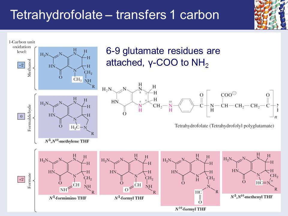 Tetrahydrofolate – transfers 1 carbon