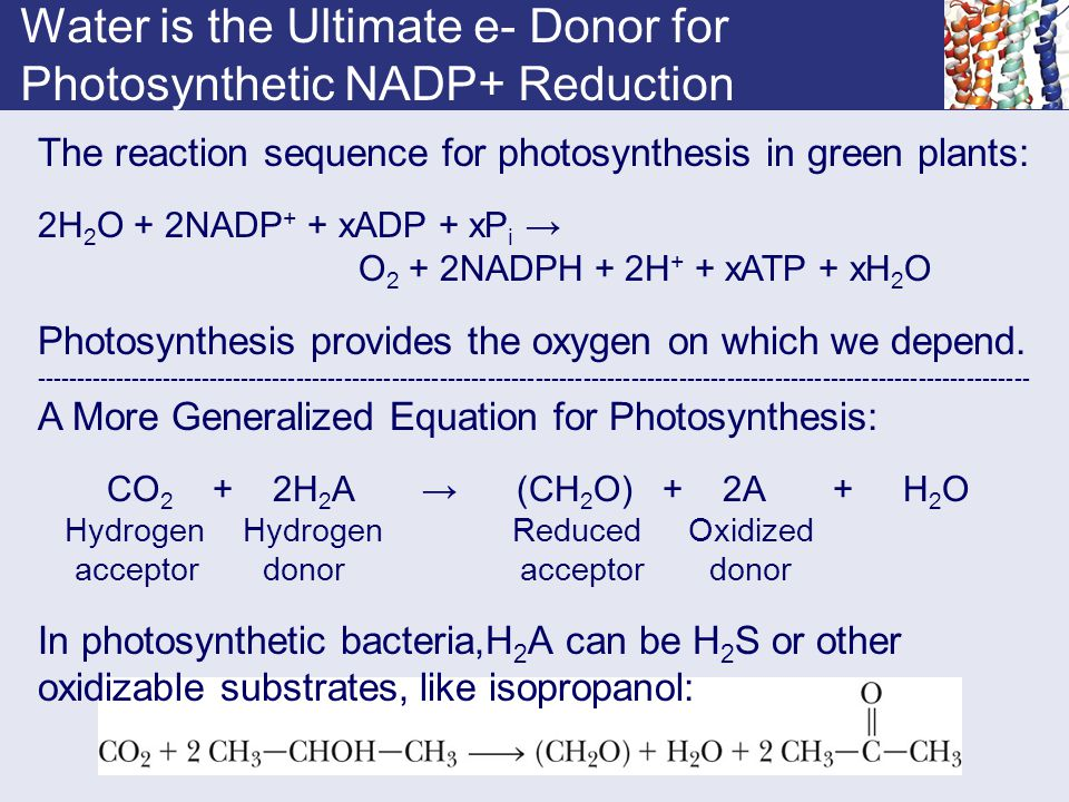 Water is the Ultimate e- Donor for Photosynthetic NADP+ Reduction