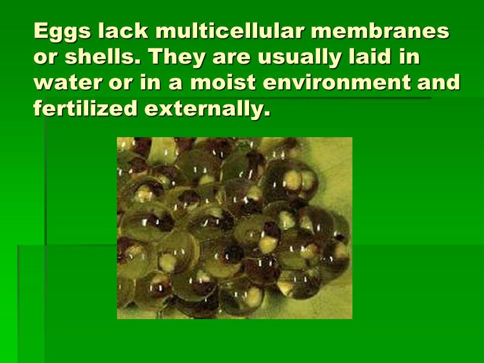 Eggs lack multicellular membranes or shells