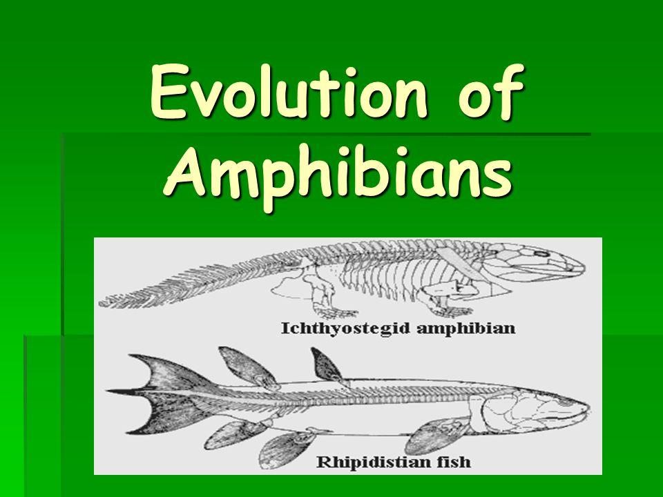 Evolution of Amphibians