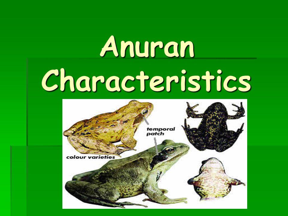 Anuran Characteristics