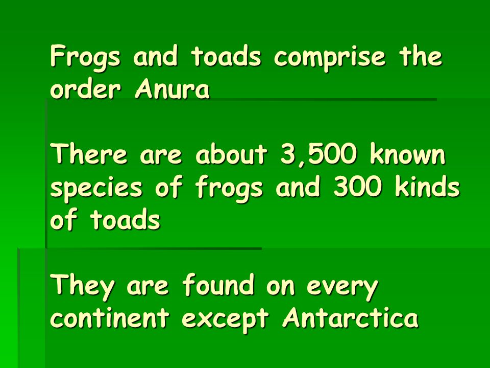 Frogs and toads comprise the order Anura There are about 3,500 known species of frogs and 300 kinds of toads They are found on every continent except Antarctica