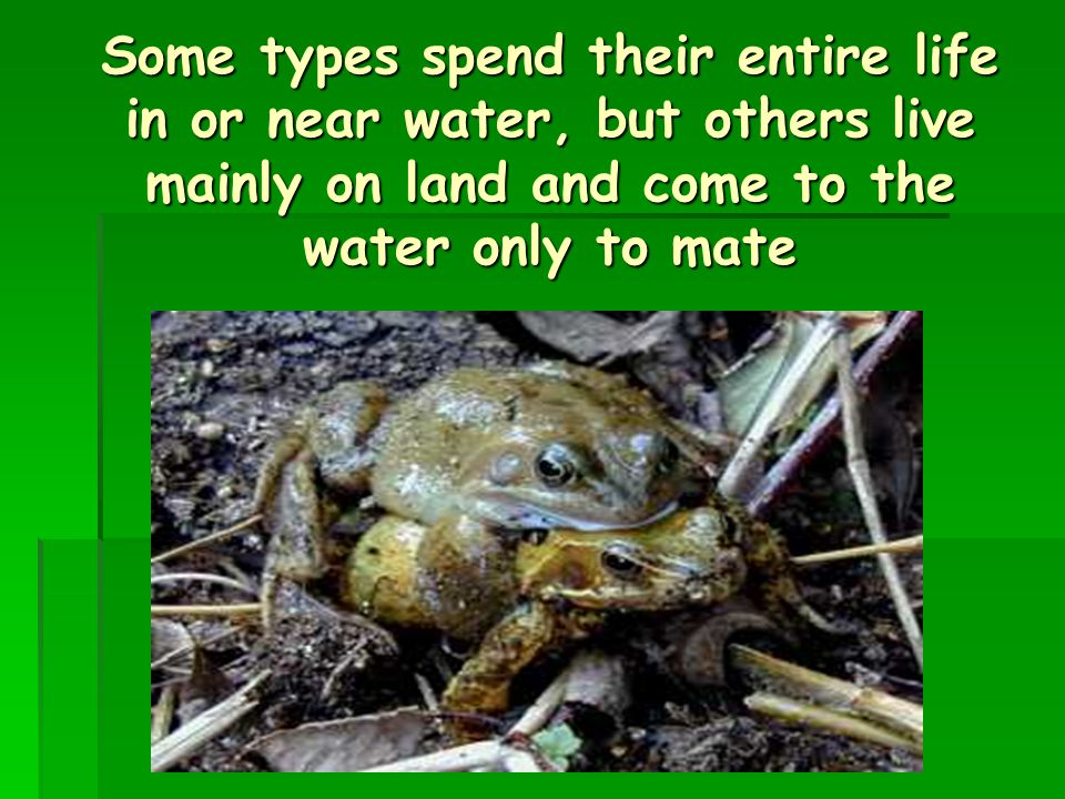 Some types spend their entire life in or near water, but others live mainly on land and come to the water only to mate