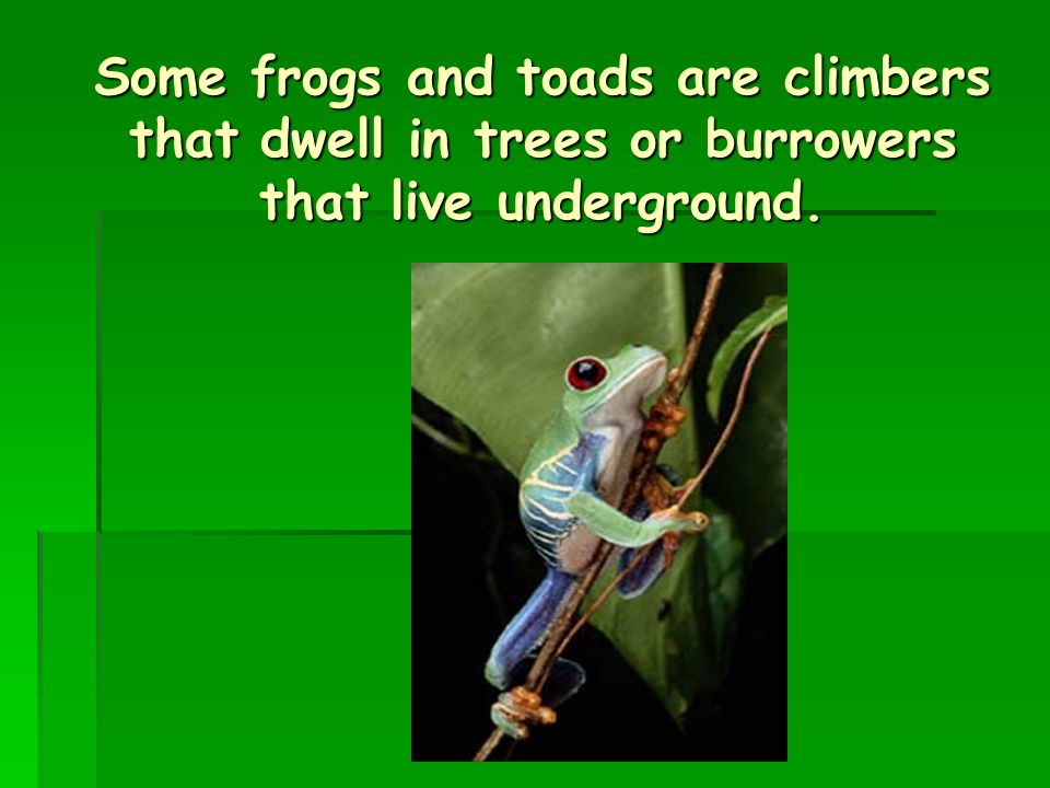 Some frogs and toads are climbers that dwell in trees or burrowers that live underground.