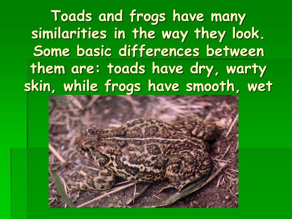 Toads and frogs have many similarities in the way they look