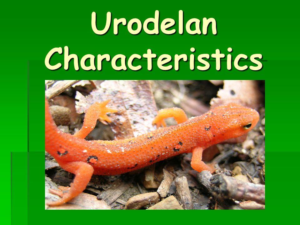 Urodelan Characteristics