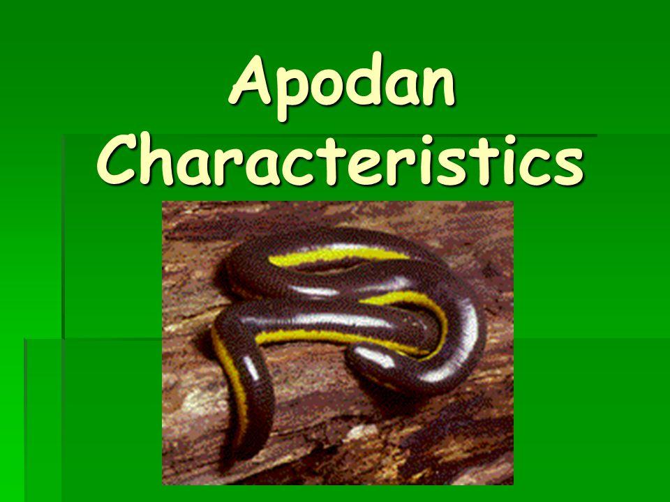Apodan Characteristics