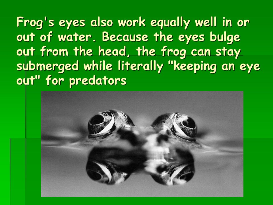 Frog s eyes also work equally well in or out of water