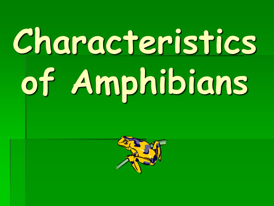 Amphibians. - ppt download