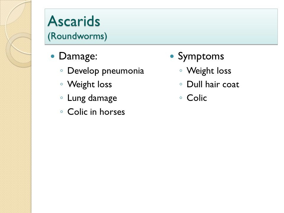 Ascarids (Roundworms)