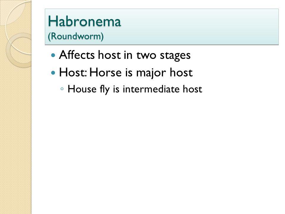 Habronema (Roundworm)