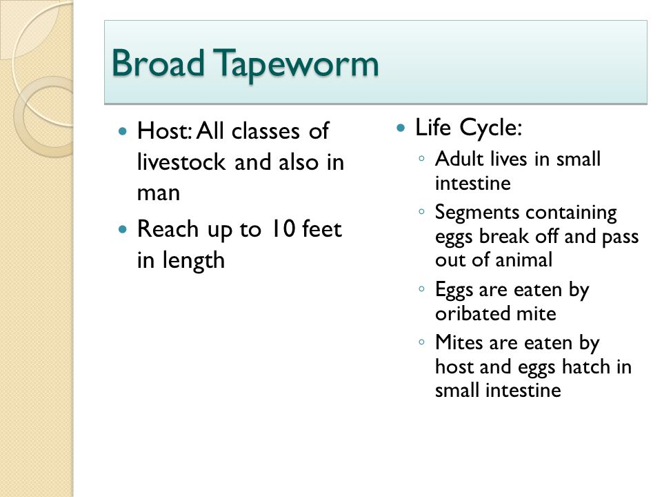 Broad Tapeworm Host: All classes of livestock and also in man