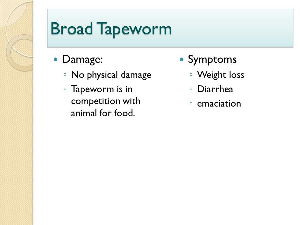 Broad Tapeworm Damage: Symptoms No physical damage