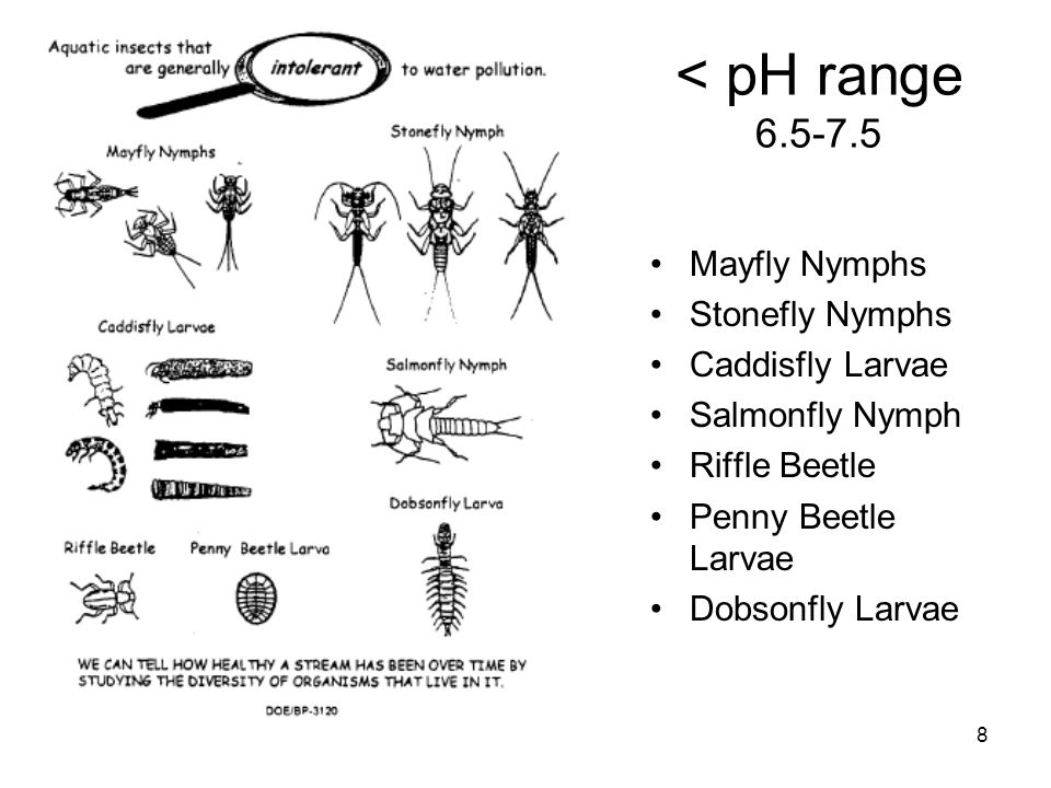 < pH range 6.5-7.5 Mayfly Nymphs Stonefly Nymphs Caddisfly Larvae