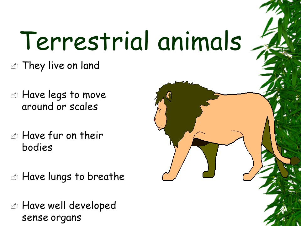 Terrestrial animals They live on land