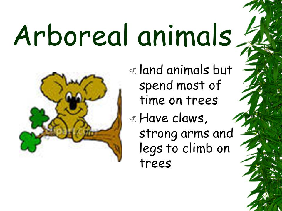Arboreal animals land animals but spend most of time on trees