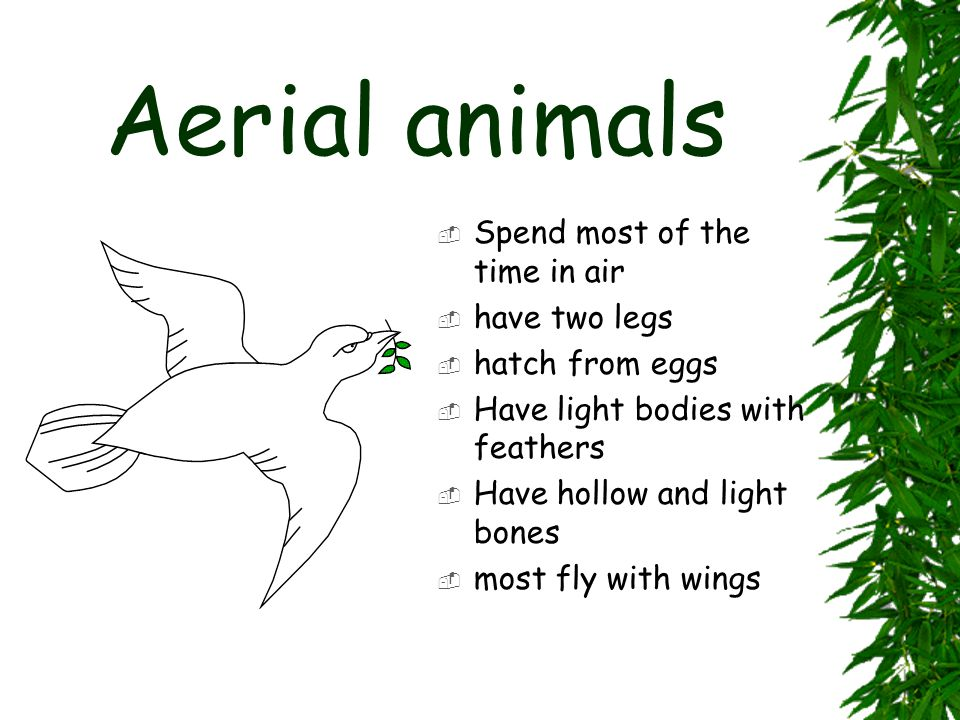 Aerial animals Spend most of the time in air have two legs