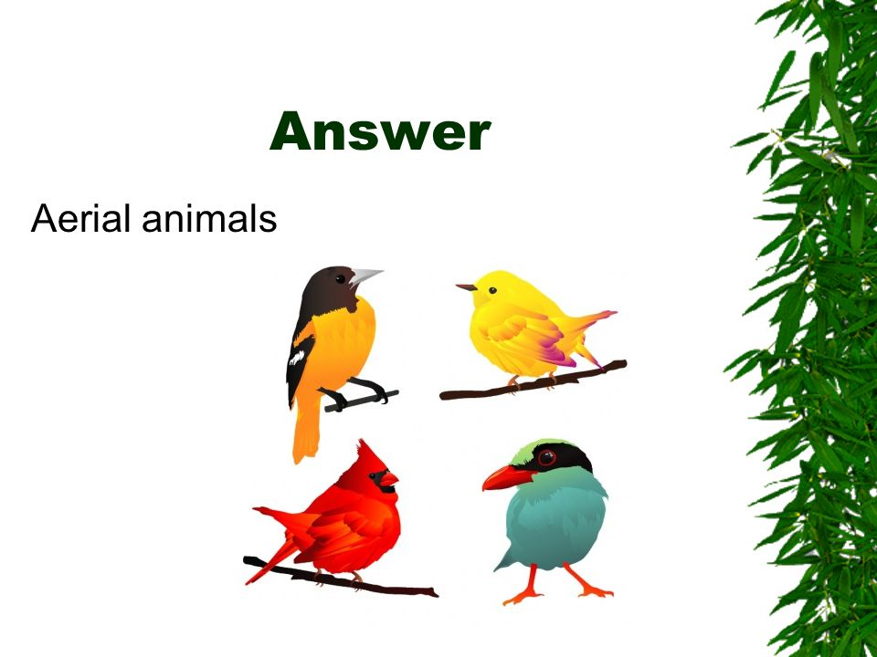 Answer Aerial animals