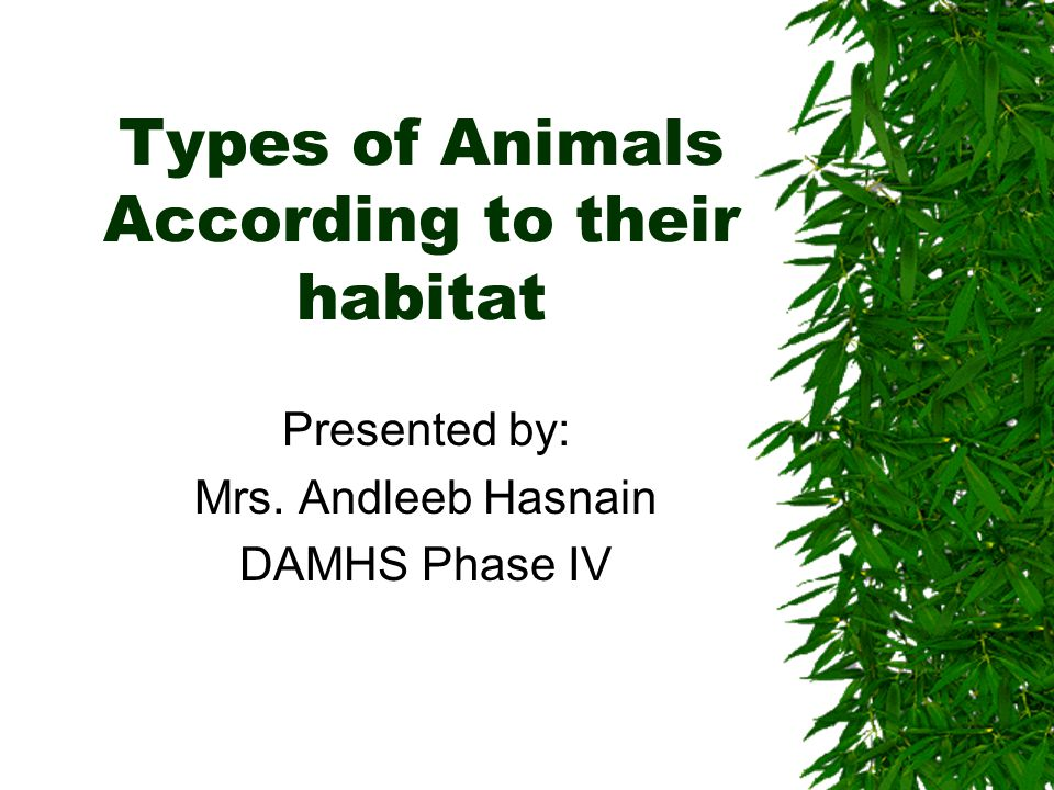 Types of Animals According to their habitat