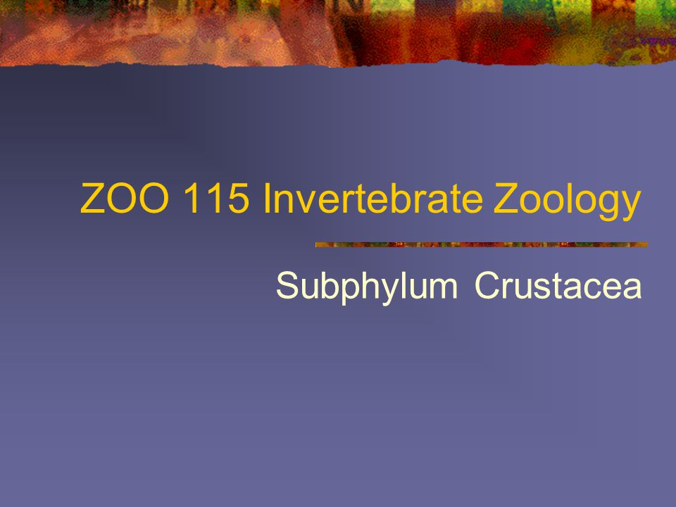 ZOO 115 Invertebrate Zoology