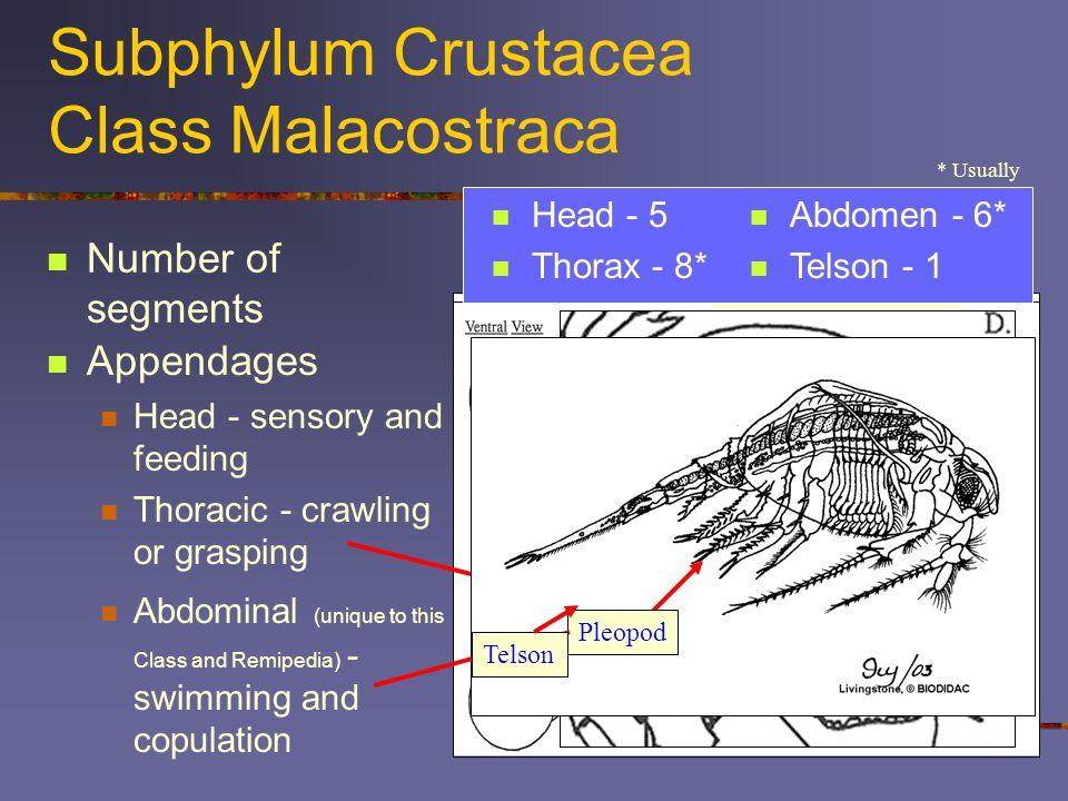Subphylum Crustacea Class Malacostraca